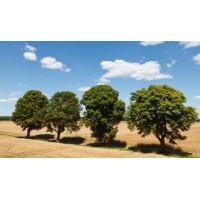 绿化废弃物无害化处理 助力辰山植物园土壤改良