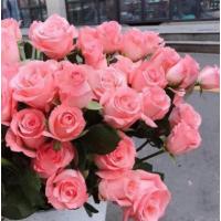 鲜切花基地发货粉色玫瑰批发