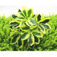 假花绿植盆栽装