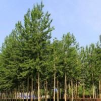 求购全国各地绿化苗木求购信息汇总