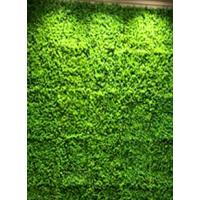 草坪室内外背景墙装饰