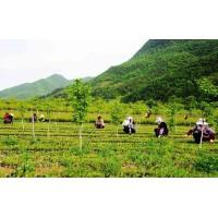 全国各地绿化苗木求购信息汇总