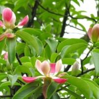 全国各地绿化苗木花木园艺材料求购信息汇集
