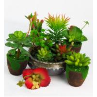 创意杂货植物